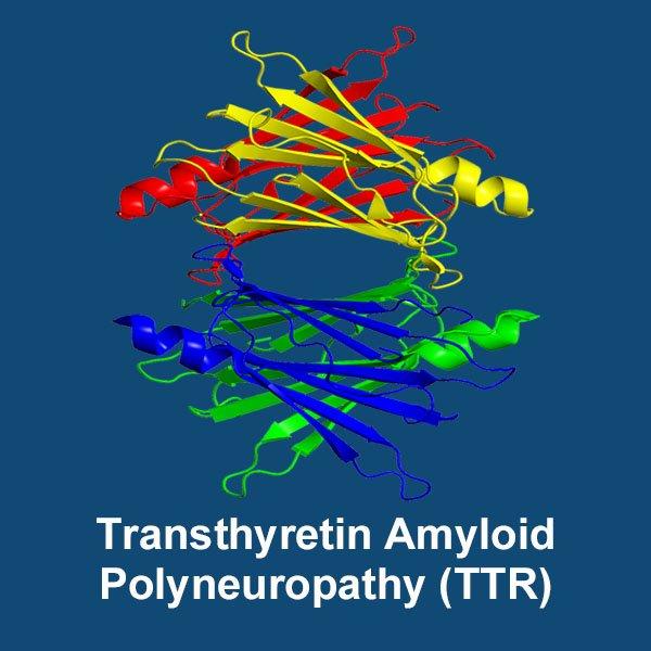 transthyretin-amyloid-polyneuropathy-image